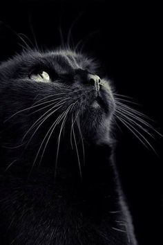 Lil' Wee is 13 this year, but since he's a black cat, he considers it lucky... He's the best cat I've ever owned.  ~~ Houston Foodlovers