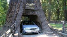 Visit Redwood National Park. Done!