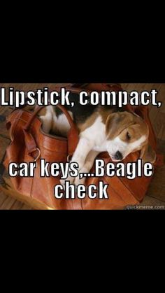 ✔️ I wish I could take my beagle in my purse!!