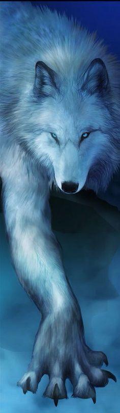 Wolf,white