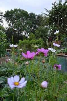 le jardin de marianne: un petit tour au jardin