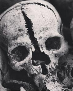Skulls and Bones Skull Reference, Anatomy Reference, Horror Themes, Skull Island, Human Skull, Skull Tattoos, Mad Max, Skull And Bones, Gothic Art