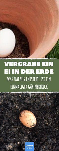 Jeder mit einem grünen Daumen weiß: Beim Gärtnern ist gute Erde für die Pflanzen das A und O. Aber wie man der Erde einige Nährstoffe zuführt, die sie normalerweise nicht hat, lernst du hier, mit diesem einfachen aber ungewöhnlichen Trick.