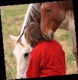Provides Real Solutions. EAGALA offers a model of Equine Assisted Psychotherapy where therapists and students alike are excited by the process. Whether used for treating all forms of addiction, trauma, social and behavioral disorders, and other issues, students find the sessions meaningful leading to real and long-lasting change.