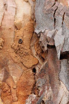 Tree Bark by kasia-aus - Katarina Christenson Patterns In Nature, Textures Patterns, Foto Macro, Tree Bark, Texture Art, Natural Texture, Belle Photo, Color Inspiration, Illustrations
