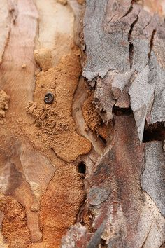 Eucalyptus bark5 by kasia-aus, via Flickr