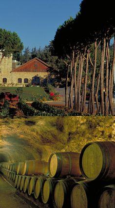 Ksara - Wander around-Vineyards in Lebanon -www.ksara.com.lb
