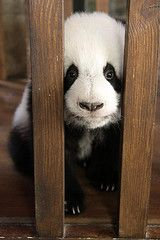 Hey....I know a great place for bamboo if you let me out of here.....