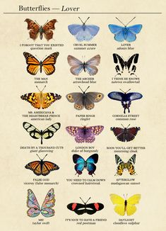 Lover track list as butterflies (based on species names & behaviors) Photo Wall Collage, Picture Wall, Collage Art, Room Posters, Poster Wall, Poster Prints, Art Mur, Butterfly Art, Butterfly Species