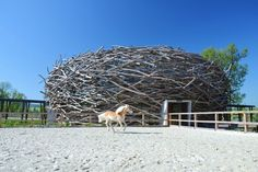 Amazing Stork Nest Farm Features a Gigantic Woven Bird Nest Riding School - not great for dressage though