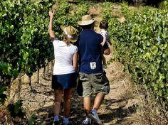 Verano enoturístico en la Ruta del Vino Ribera del Duero http://www.vinetur.com/2013060612560/verano-enoturistico-en-la-ruta-del-vino-ribera-del-duero.html
