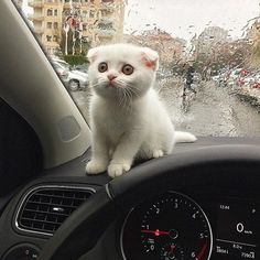 nervous about human's drive