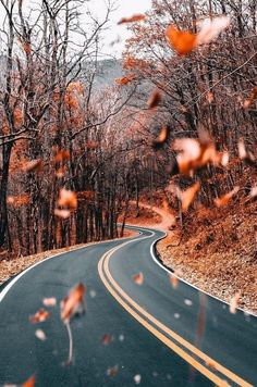 Autumn Tag wallpapers Page Landscape Nature Leaf Leaves Trees Lines Wallpaper, Animal Wallpaper, Colorful Wallpaper, Mobile Wallpaper, Black Wallpaper, Flower Wallpaper, Wallpaper Quotes, Wallpaper Backgrounds, Iphone Wallpapers