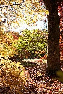 Wombat Park Daylesford * Country Style Magazine A short walk from Fortuna Cottage Autumn Day, Autumn Leaves, Autumn Girl, Autumn Harvest, Winter, Country Style Magazine, Daylesford, Beautiful World, Beautiful Gardens