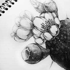 cactus, jewelry_drawing
