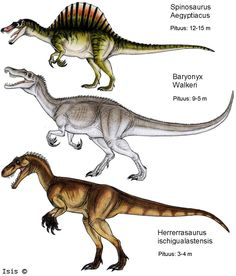 Spinosaurus aegypticus; Early–Late Cretaceous, (112–97 Ma); Theropod; Discovered by Stromer, 1915 ::: Baryonyx walkeri; Early Cretaceous (130-125 Ma); Discovered by Charig & Milner, 1986 :::