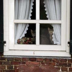 lace edged curtains, flowers in the window, brick