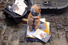Bob el gato con su propia biografía y también es parte de los 19 gatos famosos del Internet #cats #gatos #positiva #bob