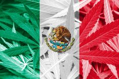 mexico  to legalise cannabis products