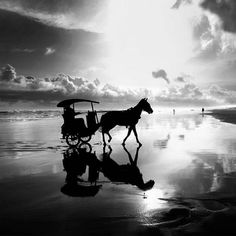 black and white images - Google Search