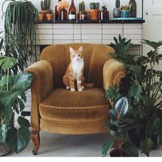 that chair and that density of plants