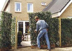 Instant green: tuinafsluiting, kant en klaar haag hagen, bamboe afsluiting, tuinschermen, bamboe tuinscherm, natuurlijke afscheidingen