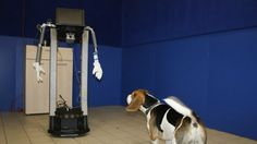 Dogs basically don't care if you are a robot or a human