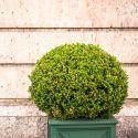 Árboles con forma esférica o redondeada