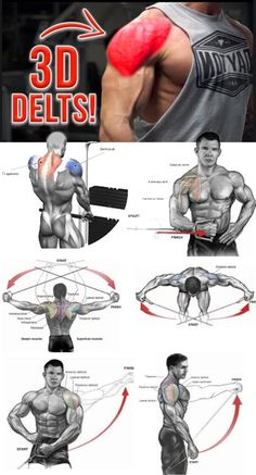 🚨TUTORIAL SHOULDER EXERCISES 👇| VIDEO & GUIDE - weighteasyloss.com - Fitness Lifestyle | Fitness and Bodybuilding Review Actuality Deltoid Workout, Biceps Workout, Muscle Fitness, Fitness Tips, Workout Fitness, Best Shoulder Workout, Shoulder Exercises, Gym Workout Chart, Chest Workouts