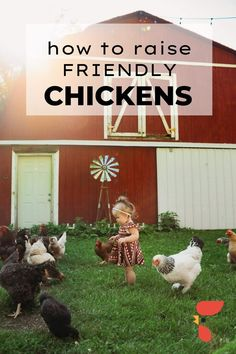 After getting your baby chicks, or after hatching – they will be very afraid and confused about everything around them. Luckily we know the most common mistakes about raising chickens, and some of the secrets which chicken keepers keep. Everything will be new to them. Baby chicks don't have the habits of an adult chicken. Types Of Chickens, Chickens And Roosters, Pet Chickens, Raising Chickens, Chickens Backyard, Natural Cleaning Recipes, Natural Cleaning Products, Homestead Survival, Survival Life