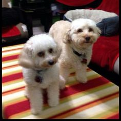 Pet Services, Pets, Animals, Animais, Animales, Animaux, Animal, Dieren, Animals And Pets
