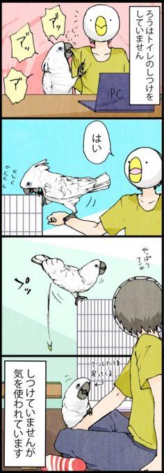 漫画「いたずらオウムの生活雑記」 (84) オウムの気遣い | ライフスタイル | マイナビニュース