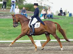 Jeremy Steinberg explains how to develop your horse's flexibility and gait quality.