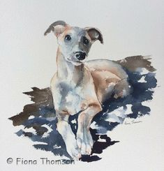 Watercolour Whippet, by Fiona Thomson.