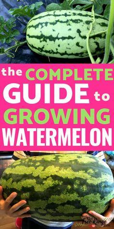 Vegetable Garden Tips, Veg Garden, Garden Types, Fruit Garden, Harvest Garden, Flowers Garden, Indoor Flowers, Watermelon Plant, How To Grow Watermelon