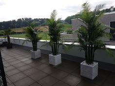 Outdoor Decor, Plants, Home Decor, Trends, Design, Environment, Palm Trees Garden, Growing Plants, Planting
