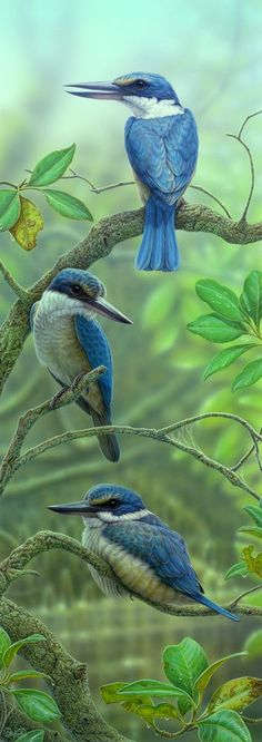 <b>Sacred Kingfishers</b> - <br/>Original (sold)<br/>Print $565 (unframed, 66 x 23 cm, edition of 100)<br/>