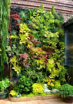 Vertical garden... love this concept. Challenging to plan and maintain, but good for shade, insulation, and environment, generally.