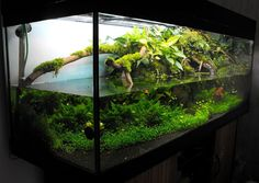 Click to close image, click and drag to move.  Use arrow keys for next and previous. Fish Tank Terrarium, Aquarium Terrarium, Reptile Terrarium, Aquarium Landscape, Nature Aquarium, Waterfall Project, Indoor Pond, Aquatic Insects, Cool Fish Tanks