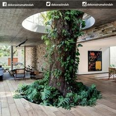 Architecture: Nature Inspired Design Ideas With Indoor Giant Tree With Some Tropical Greeneries And Vines Blend With The Interior: Amazing Contemporary Brazilian Home Design Ideas Patio Interior, Interior And Exterior, Tree Interior, Building Design, Building A House, Green Building, Future House, My House, Falling Water House