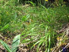 Mariposa entre la hierba