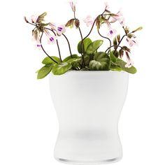 #plantenpot #EvaSolo