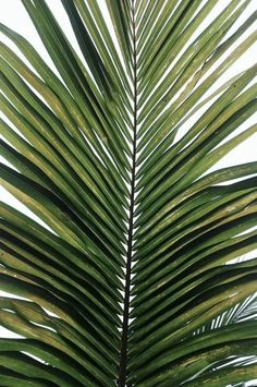 Many palm species make lovely houseplants, too, and several are easy to care for http://www.enjoyindoorgardening.blogspot.com/