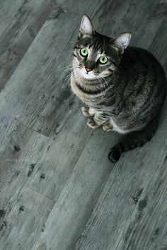#cat×interior