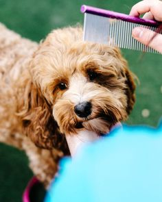 Puppy Party by LENZO - Inspiration for Dog Lovers | Pretty Fluffy