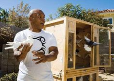 Mike Tyson, Pigeon Breeds, Racing Pigeons, Boxing History, Mma Boxing, Boxing Training, Kickboxing, Poultry, Articles