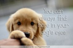 You can always find hope in your dog's eyes.  #always #animal #dog #eyes #find #hope #love #quotes  ©2016 The Gecko Said – Beautiful Quotes