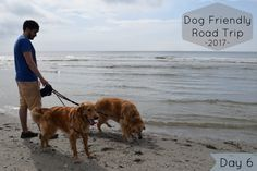 Visiting Myrtle Beach with Dogs - Pssst go early!