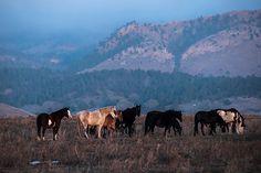 Tour the Black Hills Wild Horse Sanctuary