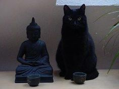 Every meow and zen, I feel silly.